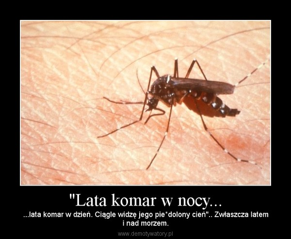 """""""Lata komar w nocy... – ...lata komar w dzień. Ciągle widzę jego pie*dolony cień"""".. Zwłaszcza latemi nad morzem."""