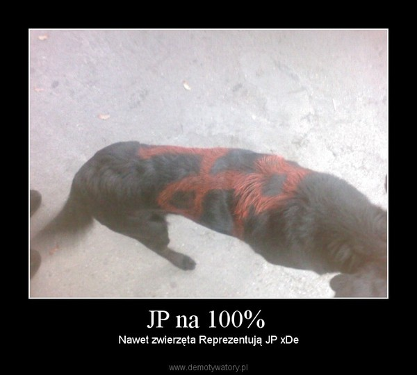 JP na 100%  – Nawet zwierzęta Reprezentują JP xDe