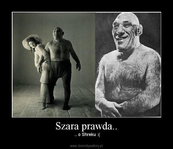 Szara prawda.. –  .. o Shreku :(