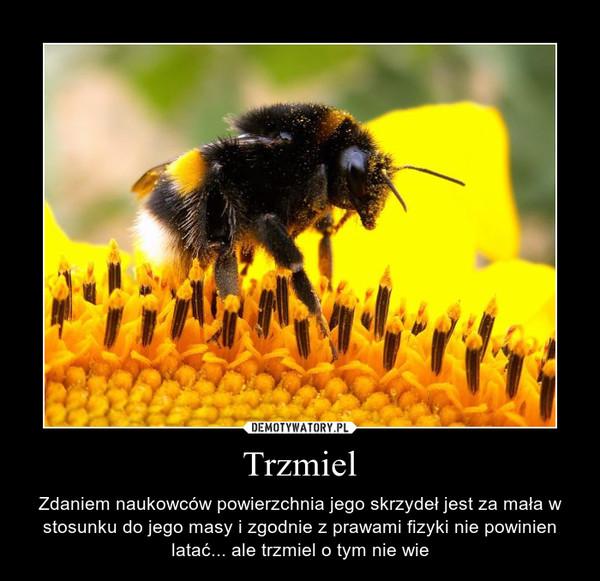 Trzmiel – Demotywatory.pl