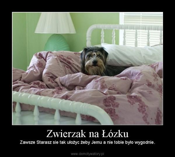 Zwierzak na Łózku – Zawsze Starasz sie tak ułożyc żeby Jemu a nie tobie było wygodnie.