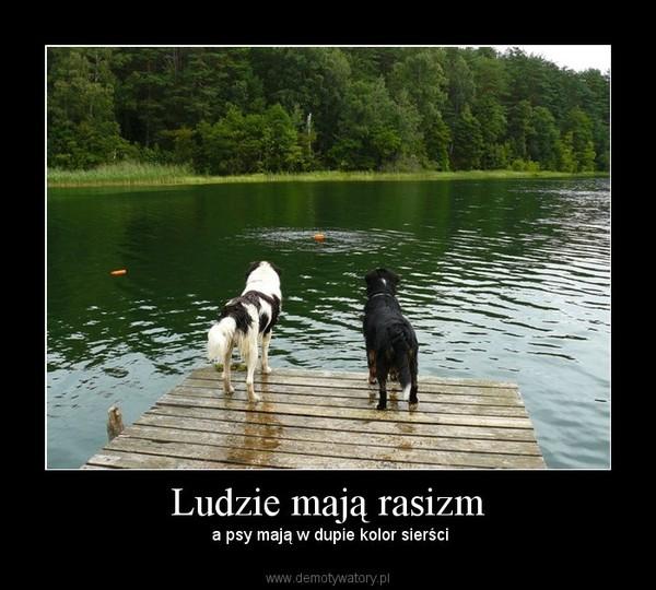 Ludzie mają rasizm – a psy mają w dupie kolor sierści