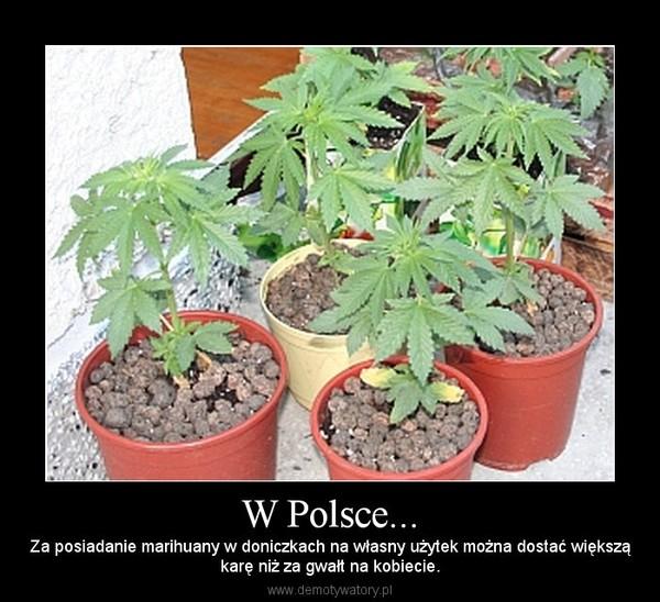 W Polsce... – Za posiadanie marihuany w doniczkach na własny użytek można dostać większąkarę niż za gwałt na kobiecie.