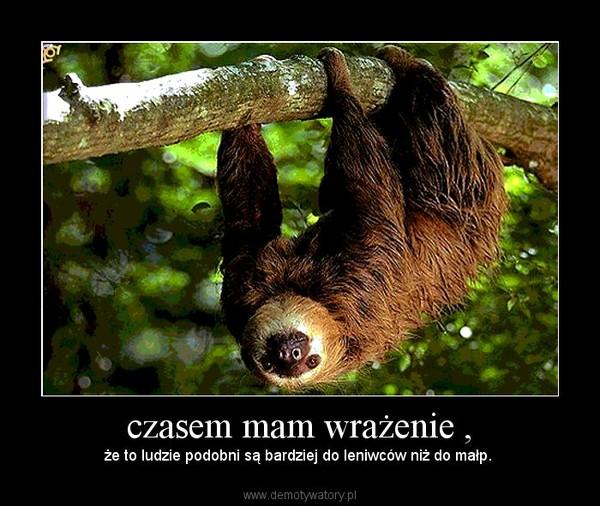 czasem mam wrażenie , – że to ludzie podobni są bardziej do leniwców niż do małp.