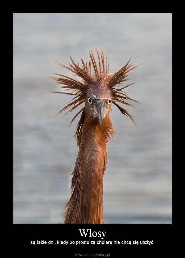 Włosy – są takie dni, kiedy po prostu za cholerę nie chcą się ułożyć