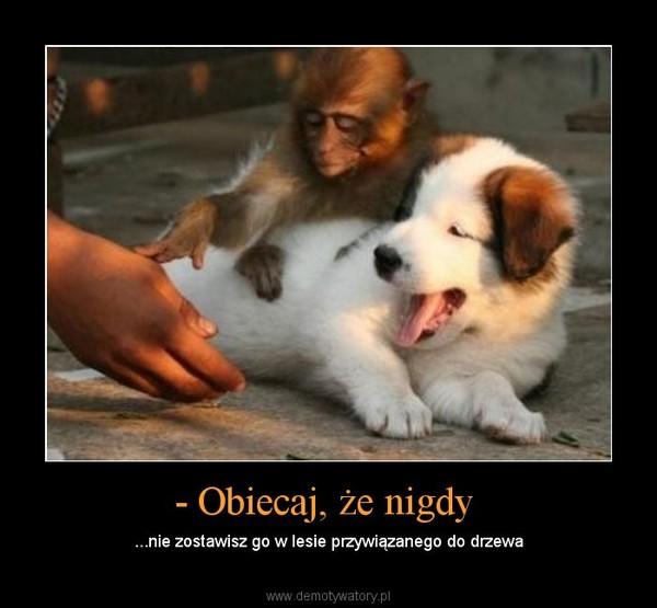 - Obiecaj, że nigdy  – ...nie zostawisz go w lesie przywiązanego do drzewa