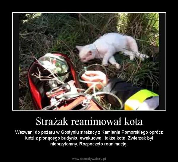 Strażak reanimował kota – Wezwani do pożaru w Gostyniu strażacy z Kamienia Pomorskiego oprócz ludzi z płonącego budynku ewakuowali także kota. Zwierzak był nieprzytomny. Rozpoczęto reanimację.