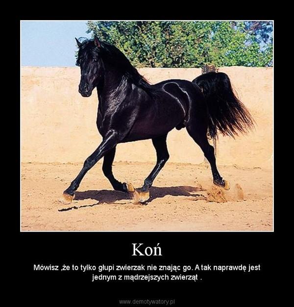 Koń – Mówisz ,że to tylko głupi zwierzak nie znając go. A tak naprawdę jest jednym z mądrzejszych zwierząt .