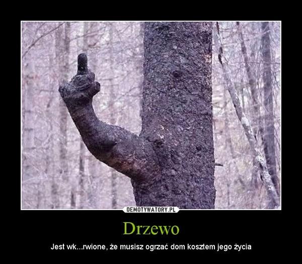 Drzewo – Jest wk...rwione, że musisz ogrzać dom kosztem jego życia