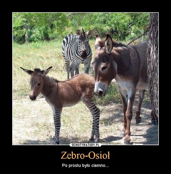 Zebro-Osioł – Po prostu było ciemno...