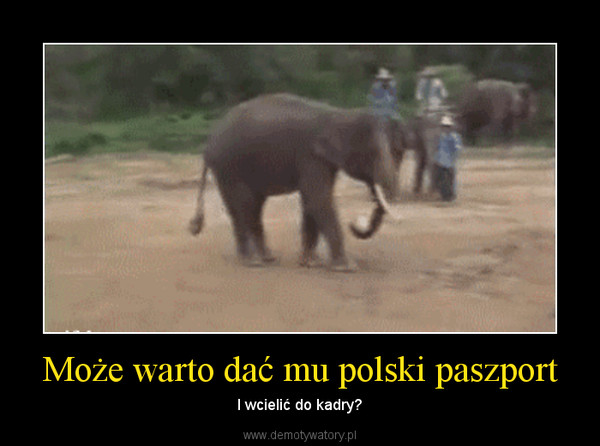 Może warto dać mu polski paszport – I wcielić do kadry?
