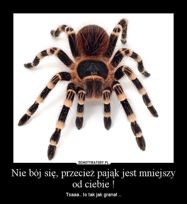 Nie bój się, przecież pająk jest mniejszy od ciebie ! – Tsaaa.. to tak jak granat ..