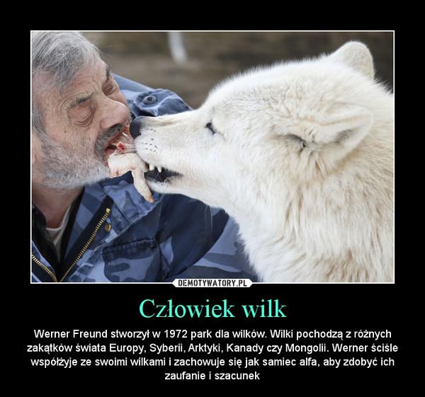 Człowiek wilk – Werner Freund stworzył w 1972 park dla wilków. Wilki pochodzą z różnych zakątków świata Europy, Syberii, Arktyki, Kanady czy Mongolii. Werner ściśle współżyje ze swoimi wilkami i zachowuje się jak samiec alfa, aby zdobyć ich zaufanie i szacunek
