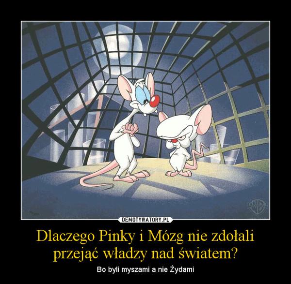 Dlaczego Pinky i Mózg nie zdołali przejąć władzy nad światem? – Bo byli myszami a nie Żydami