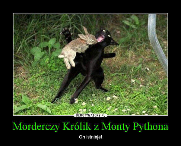 Morderczy Królik z Monty Pythona – On istnieje!