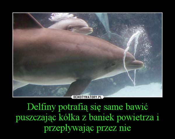 Delfiny potrafią się same bawić puszczając kółka z baniek powietrza i przepływając przez nie –