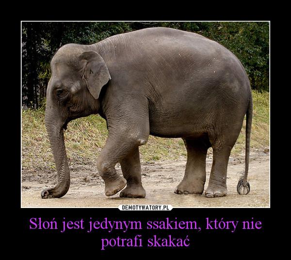 Słoń jest jedynym ssakiem, który nie potrafi skakać –