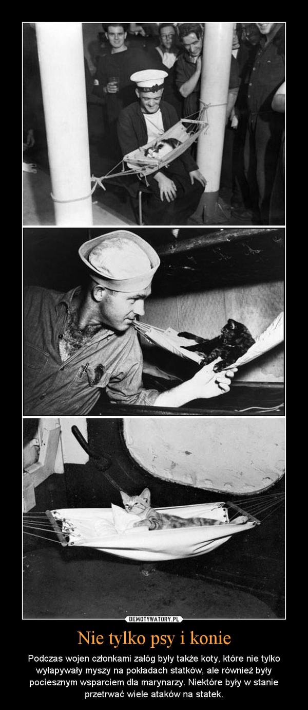Nie tylko psy i konie – Podczas wojen członkami załóg były także koty, które nie tylko wyłapywały myszy na pokładach statków, ale również były pociesznym wsparciem dla marynarzy. Niektóre były w stanie przetrwać wiele ataków na statek.
