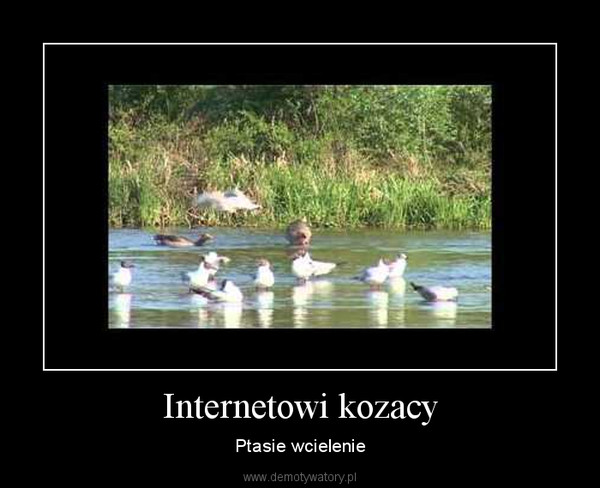 Internetowi kozacy – Ptasie wcielenie