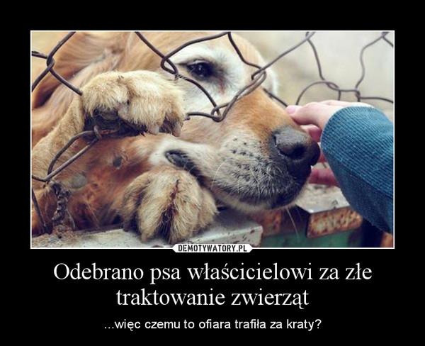Odebrano psa właścicielowi za złe traktowanie zwierząt – ...więc czemu to ofiara trafiła za kraty?