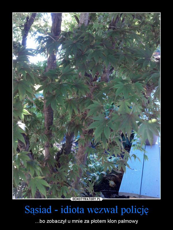 Sąsiad - idiota wezwał policję – ...bo zobaczył u mnie za płotem klon palmowy