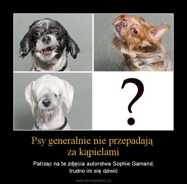 Psy generalnie nie przepadają za kąpielami – Patrząc na te zdjęcia autorstwa Sophie Gamand,trudno im się dziwić