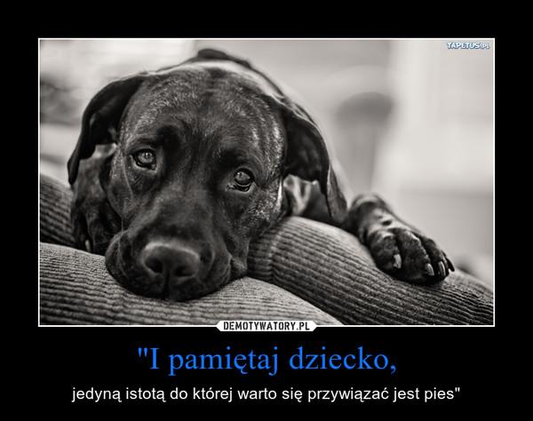 """""""I pamiętaj dziecko, – jedyną istotą do której warto się przywiązać jest pies"""""""