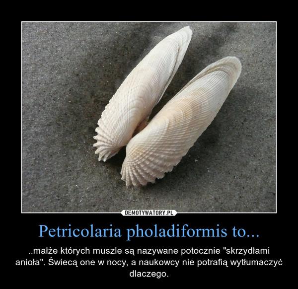 """Petricolaria pholadiformis to... – ..małże których muszle są nazywane potocznie """"skrzydłami anioła"""". Świecą one w nocy, a naukowcy nie potrafią wytłumaczyć dlaczego."""