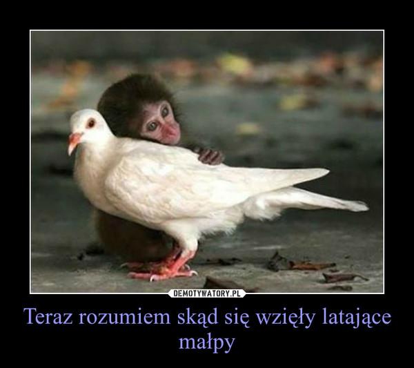 Teraz rozumiem skąd się wzięły latające małpy –