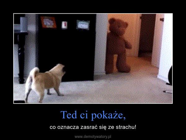Ted ci pokaże, – co oznacza zasrać się ze strachu!