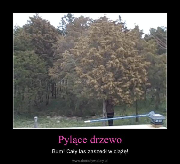 Pylące drzewo – Bum! Cały las zaszedł w ciążę!