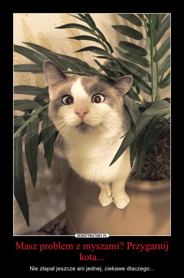 Masz problem z myszami? Przygarnij kota... – Nie złapał jeszcze ani jednej, ciekawe dlaczego...
