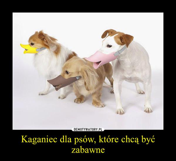 Kaganiec dla psów, które chcą być zabawne –