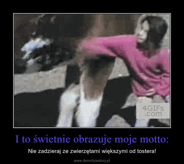 I to świetnie obrazuje moje motto: – Nie zadzieraj ze zwierzętami większymi od tostera!