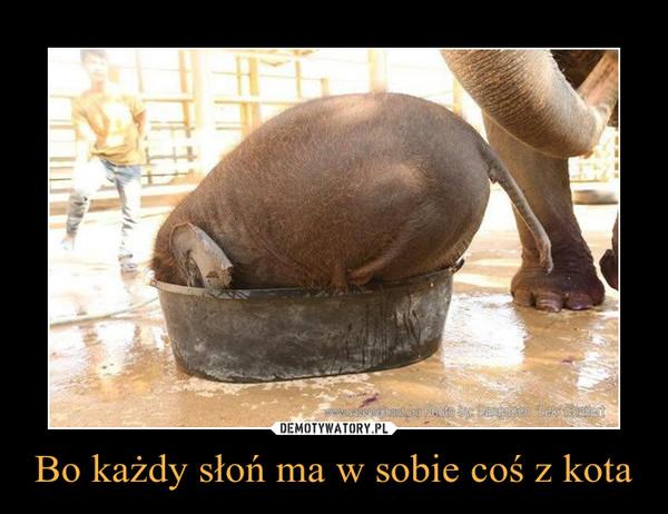 Bo każdy słoń ma w sobie coś z kota –