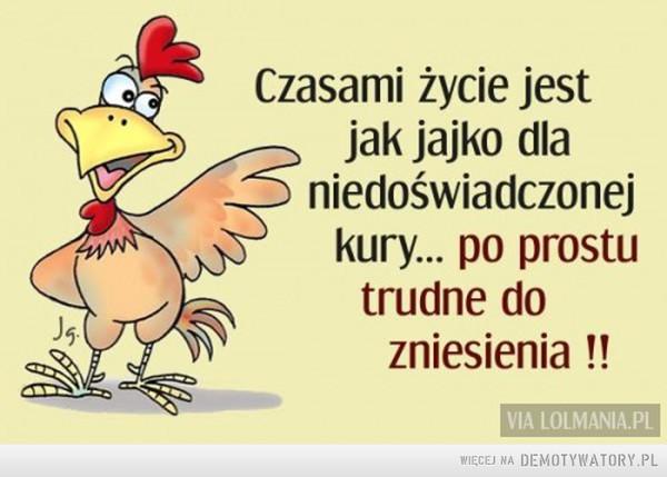 Życie jak jajko –