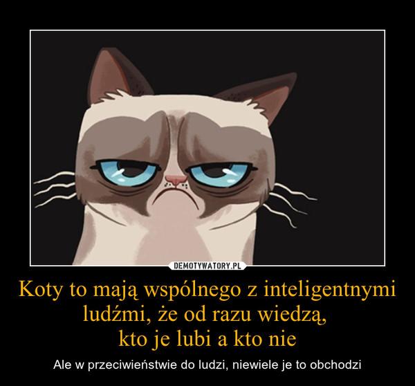 Koty to mają wspólnego z inteligentnymi ludźmi, że od razu wiedzą, kto je lubi a kto nie – Ale w przeciwieństwie do ludzi, niewiele je to obchodzi