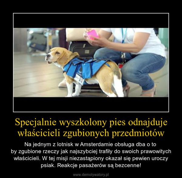 Specjalnie wyszkolony pies odnajduje właścicieli zgubionych przedmiotów – Na jednym z lotnisk w Amsterdamie obsługa dba o to by zgubione rzeczy jak najszybciej trafiły do swoich prawowitych właścicieli. W tej misji niezastąpiony okazał się pewien uroczy psiak. Reakcje pasażerów są bezcenne!