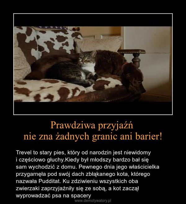 Prawdziwa przyjaźń nie zna żadnych granic ani barier! – Trevel to stary pies, który od narodzin jest niewidomy i częściowo głuchy.Kiedy był młodszy bardzo bał się sam wychodzić z domu. Pewnego dnia jego właścicielka przygarnęła pod swój dach zbłąkanego kota, którego nazwała Pudditat. Ku zdziwieniu wszystkich obazwierzaki zaprzyjaźniły się ze sobą, a kot zaczął wyprowadzać psa na spacery