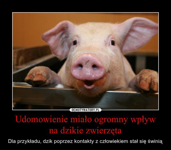 Udomowienie miało ogromny wpływna dzikie zwierzęta – Dla przykładu, dzik poprzez kontakty z człowiekiem stał się świnią