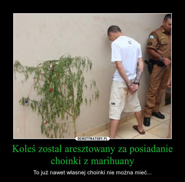 Koleś został aresztowany za posiadanie choinki z marihuany – To już nawet własnej choinki nie można mieć...