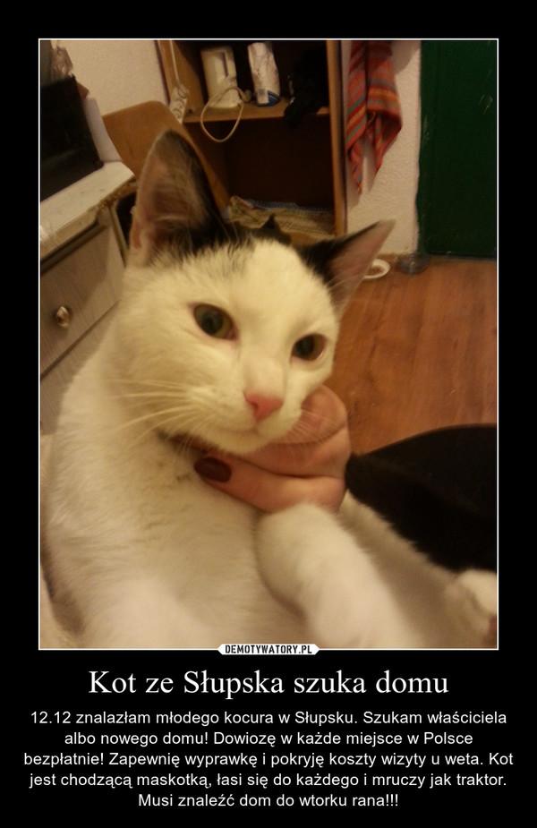 Kot ze Słupska szuka domu – 12.12 znalazłam młodego kocura w Słupsku. Szukam właściciela albo nowego domu! Dowiozę w każde miejsce w Polsce bezpłatnie! Zapewnię wyprawkę i pokryję koszty wizyty u weta. Kot jest chodzącą maskotką, łasi się do każdego i mruczy jak traktor. Musi znaleźć dom do wtorku rana!!!