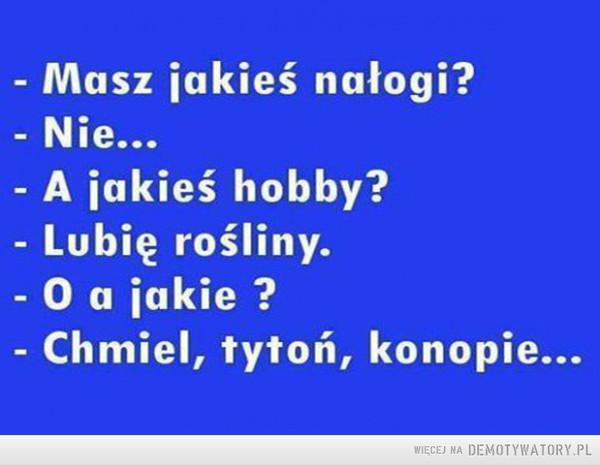 Hobby –