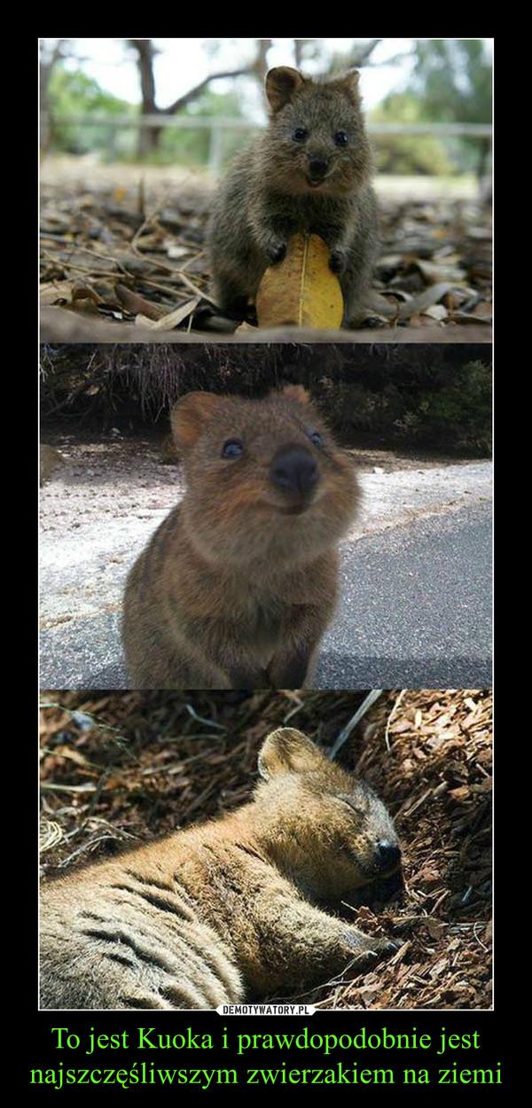 To jest Kuoka i prawdopodobnie jest najszczęśliwszym zwierzakiem na ziemi –