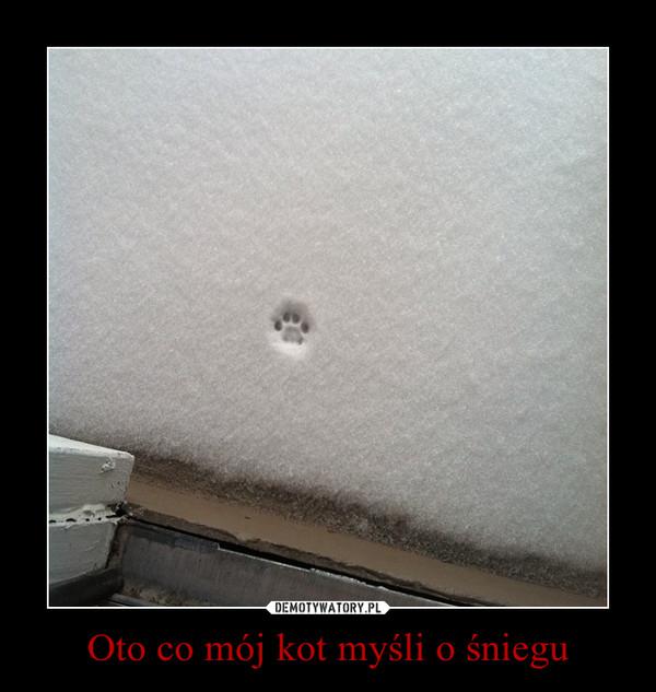 Oto co mój kot myśli o śniegu –