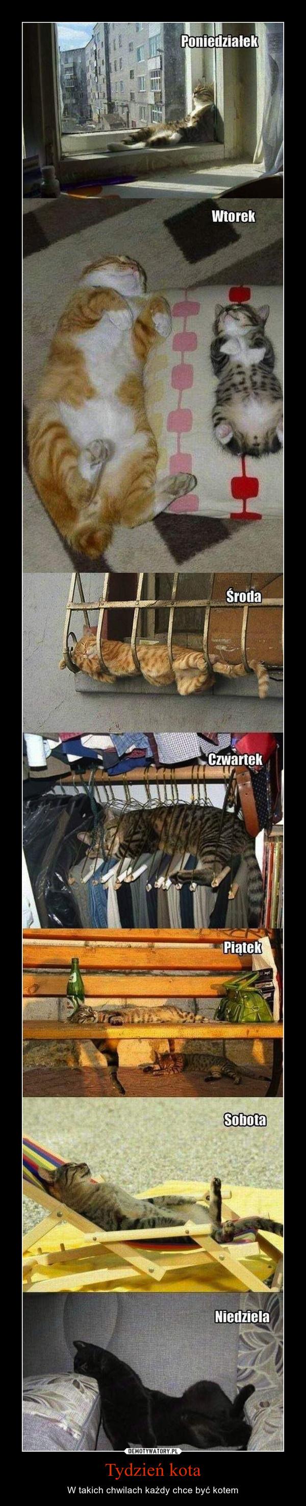 Tydzień kota – W takich chwilach każdy chce być kotem