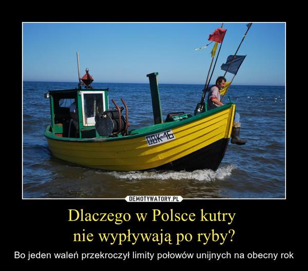 Dlaczego w Polsce kutry nie wypływają po ryby? – Bo jeden waleń przekroczył limity połowów unijnych na obecny rok