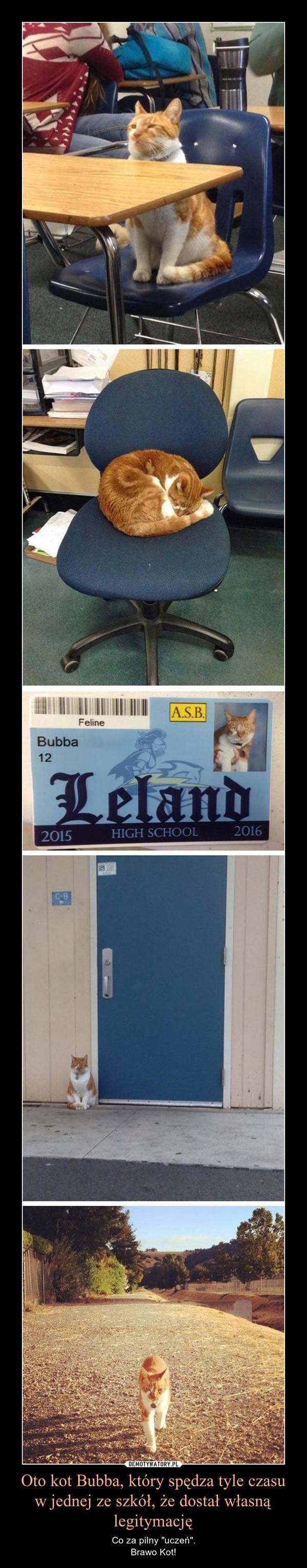 """Oto kot Bubba, który spędza tyle czasu w jednej ze szkół, że dostał własną legitymację – Co za pilny """"uczeń"""".Brawo Kot!"""