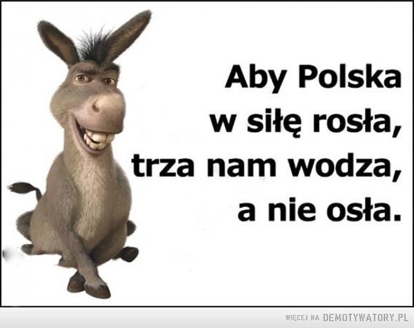 Aby Polska z siłę rosła... –  Aby Polska w siłę rosła, trza nam wodza, a nie osła.