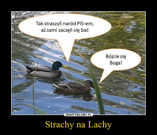Strachy na Lachy –